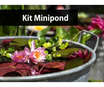 Kit Mini Pond