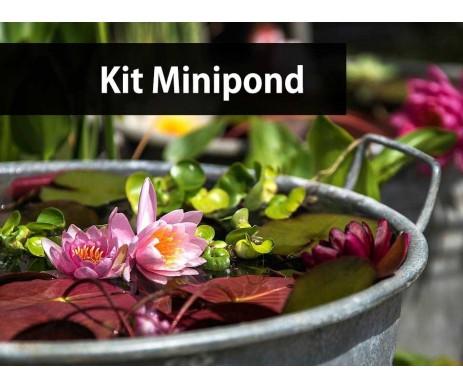 Kit Mini Pond