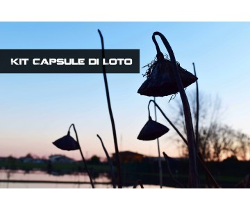 Kit Capsule di Loto
