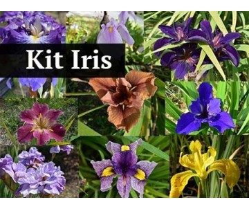 Kit Iris